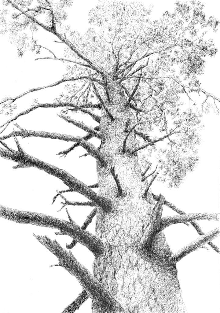 """Серія рисунків """"Древа"""""""