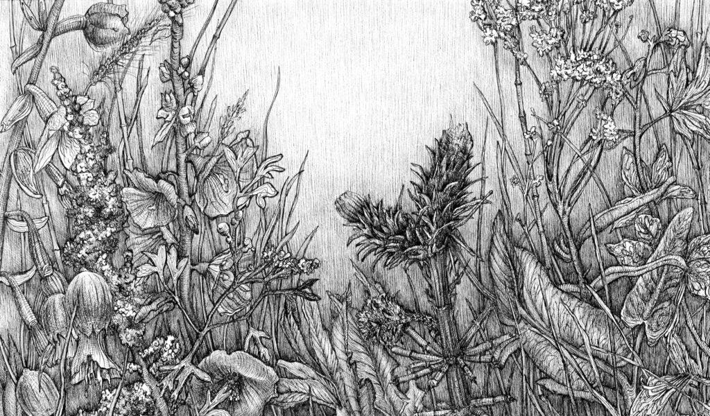 Крымские травы №6