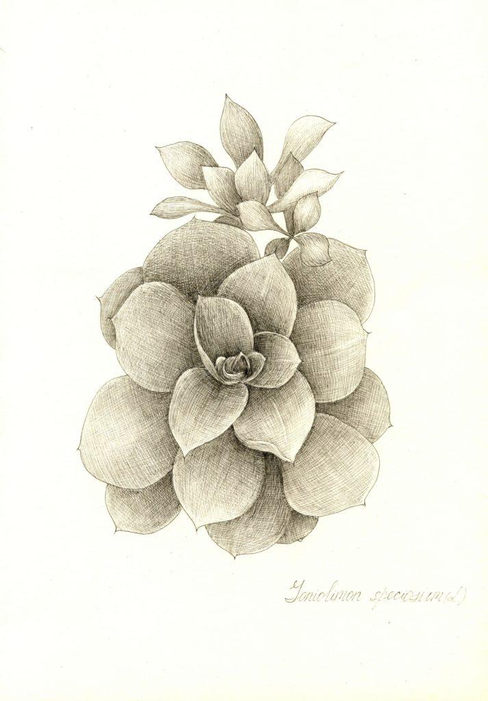 Серія ботанічних рисунків